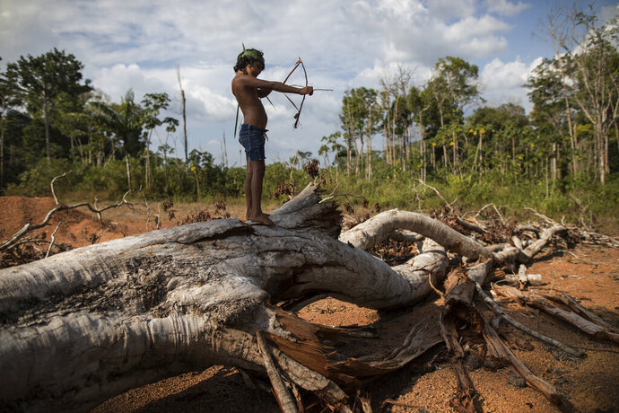 """In this Sept. 2, 2019 photo, seven-year-old Emilia Tembe pulls back on her hand-crafted toy bow and arrow made of sticks and leaves as she stands on a fallen tree, in the Ka 'a kyr village, Para state, Brazil. """"This part used to be a native forest. This was primary jungle. But the fire arrived and it cleared the land,"""" said Emidio Tembe, Emilia's grandfather and the Ka' a kyr chieftain who named the village. (AP Photo/Rodrigo Abd)"""