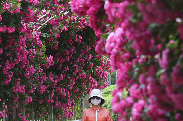 A woman wearing a face mask to help protect against the spread of the new coronavirus passes by the Rose Garden at a park in Goyang, South Korea, Tuesday, June 2, 2020. Areas around the South Korean capital moved to curb large gatherings Tuesday and officials urged churchgoers and some health care workers to avoid crowds as the number of new coronavirus once again increased. (AP Photo/Ahn Young-joon)