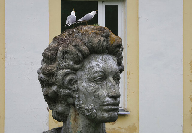 Seagulls sit on the head of a sculpture of Russian poet Aleksander Pushkin on the day of his 221st birthday in Naziya village, 80 km (50 miles) east of St. Petersburg, Russia, Saturday, June 6, 2020. (AP Photo/Dmitri Lovetsky)