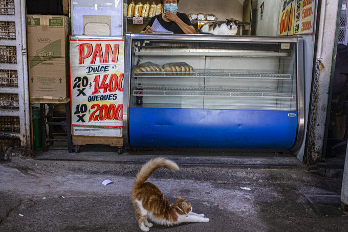 A cat stretches in front of a bakery at La Vega market in Santiago, Chile, Thursday, March 4, 2021. More than 20 million people were pushed into poverty during pandemic-plagued 2020 across Latin America and the Caribbean, the U.N. economic agency for the region reported Thursday. (AP Photo/Esteban Felix)