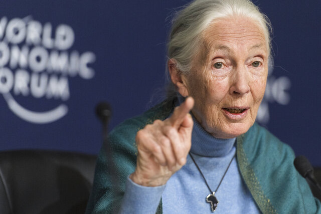 """FILE - In this Jan. 22, 2020 file photo Jane Goodall, English primatologist and anthropologist, addresses the media during a press conference as part of the 50th annual meeting of the World Economic Forum (WEF) in Davos, Switzerland. Celadon Books announced Monday, Feb. 24, that Goodall's """"The Book of Hope"""" will be published in the Fall 2021. The new project is a collaboration with Doug Abrams, author of the best selling """"The Book of Joy,"""" and comes 60 years after the celebrated primatologist began her pioneering research of chimpanzees in Africa. (Alessandro della Valle/Keystone via AP, File)"""