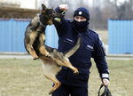 "Police officer Pawel Kuchnio in training with patrol dog Orbita, in Warsaw, Poland, on Friday, March 19, 2021. When they age, the dogs and horses that serve in Poland's police, Border Guard and other services cannot always count on a rewarding existence. Responding to calls from concerned servicemen, the Interior Ministry has proposed a bill that would give the animals an official status and retirement pension, hoping this gesture of ""ethical obligation"" will win unanimous backing. (AP Photo/Czarek Sokolowski)"