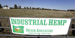 FILE - In this April 23, 2018, file photo, a sign designates the type of crop grown in a field as it stands ready to have another hemp crop planted for Big Top Farms near Sisters, Ore. Draft rules released by the U.S. Department of Agriculture for a new and booming agricultural hemp industry have alarmed farmers, processors and retailers across the country, who say the provisions will be crippling if they are not significantly overhauled before they become final. (AP Photo/Don Ryan, File)