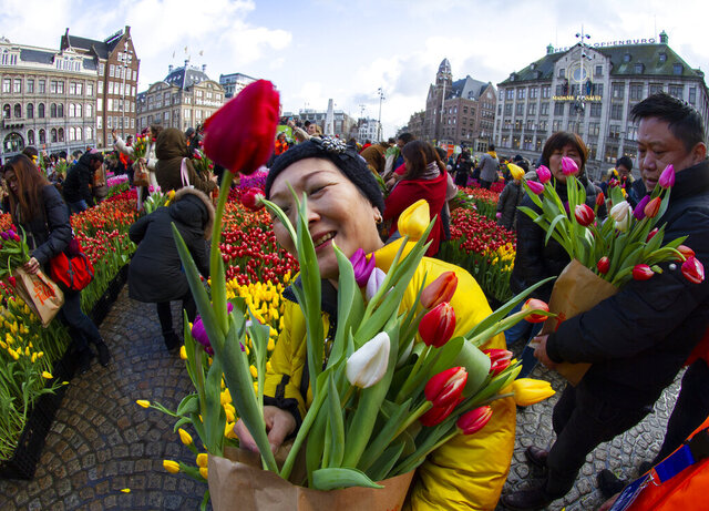 Scores of people pick free tulips on Dam Square in front of the Royal Palace in Amsterdam, Netherlands, Saturday, Jan. 18, 2020, on national tulip day which marks the opening of the 2020 season. (AP Photo/Peter Dejong)