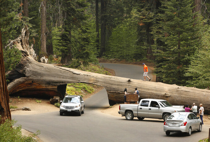 FILE - In this Sept. 11, 2015, file photo, visitors explore the Tunnel Log, a passage cut through a giant Sequoia tree that fell in 1937, at Sequoia National Park, near Visalia, Calif. Sequoia National Park was shut down and its namesake gigantic trees were under potential threat Tuesday, Sept. 14, 2021, as forest fires burned in steep and dangerous terrain in California's Sierra Nevada. The Colony and Paradise fires were ignited by lightning last week and were being battled collectively as the KNP Complex. (AP Photo/Rich Pedroncelli, File)