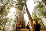 Line safety director Joe Labak marks a falling branch hazard in the Trail of 100 Giants of Sequoia National Forest, Calif., as the Windy Fire burns on Monday, Sept. 20, 2021. Labak said the sequoia at center sustained fire damage when the fire spotted into its crown. (AP Photo/Noah Berger)