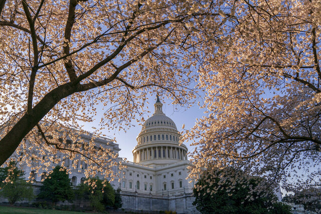 FILE - In this April 1, 2019, file photo the Capitol is framed amid blooming cherry trees in Washington. In a city where the meet-and-greet is hardwired into the culture of political life, the coronavirus is rapidly changing the norms, even before a first case arrives in the nation's capital. (AP Photo/J. Scott Applewhite, File)