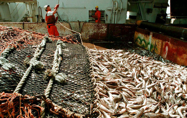 FILE - Workers harvest whiting aboard the factory fishing vessel American Triumph off the coast of Alaska on May 28, 1996. Officials say a that the ship docked in the Alaska fishing port of Dutch Harbor in the Aleutian Islands with 85 crew members infected with the coronavirus on board. Alaska's Energy Deck reported the American Triumph was scheduled to sail from the Dutch Harbor community of Unalaska with a planned arrival in Seward Wednesday, July 22, 2020. (Benjamin Brink/The Oregonian via AP, File)