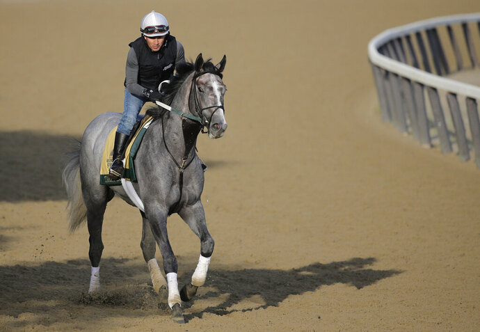 Exercise rider Joe Ramos rides Tacitus during a workout at Belmont Park in Elmont, N.Y., Friday, June 7, 2019. The 151st Belmont Stakes horse race will be run on Saturday, June 8, 2019. (AP Photo/Seth Wenig)