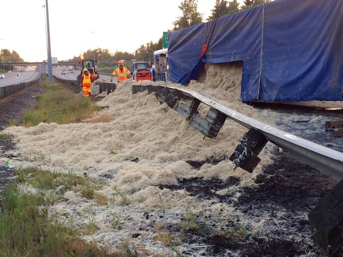 In this Wednesday, May 23, 2018, photo provided by KOMOnews.com, chicken feathers cover the ground alongside Interstate 5 in Federal Way, Wash. A tractor-trailer made a fowl mess when it rolled over, dumping about 40,000 pounds of chicken feathers across the freeway. Washington State Patrol Trooper Rick Johnson says the driver told investigators he fell asleep at about 3:30 a.m. north of Tacoma and lost control of the truck, which hit a guardrail and overturned. The truck was hauling the feathers from a poultry facility to a rendering company in Vancouver, British Columbia. (Theron Zahn/KOMOnews.com via AP)