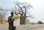 In this photo taken Wednesday, Sept. 20, 2017, a child with a bucket of baobab fruit stands in front of a giant baobab tree, in Chimanimani, Zimbabwe. Africa's ancient baobab, with it's distinctive swollen trunk and known as the