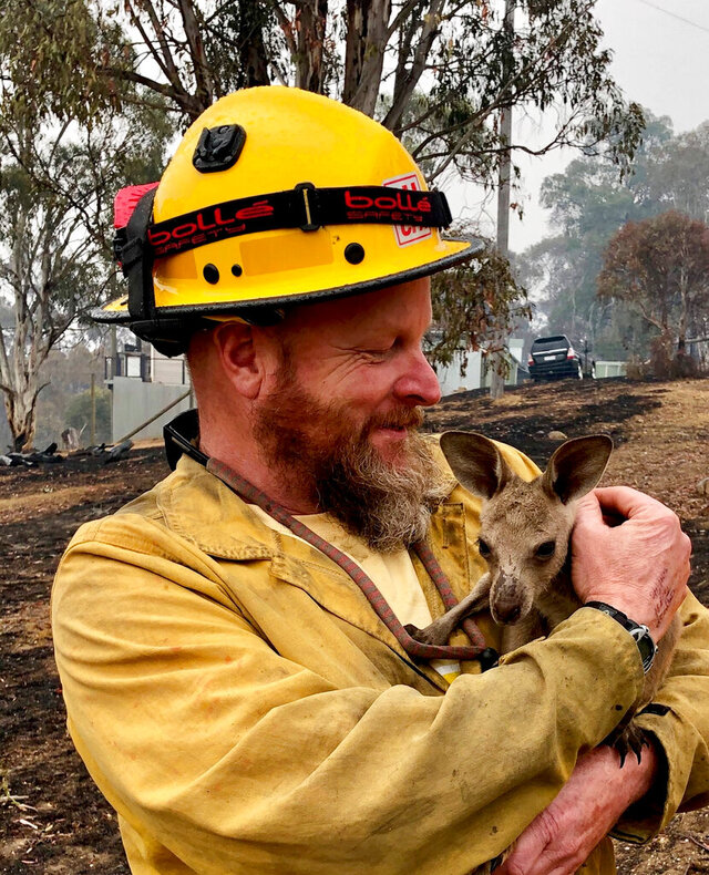 FILE - In this Jan. 5, 2020, file photo provided by the United States Department of Agriculture Forest Service, Lake Tahoe Basin Management Unit Capt. Dave Soldavini holds a baby kangaroo that was rescued from a wildfire in Cobrunga, Australia. (Jeremy McMahon/USDAFS Bureau of Land Management via AP, File)