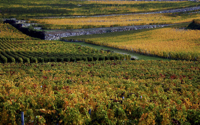 FILE - This Oct.26, 2015 file photo shows vineyards around Saint-Emilion, southwestern France. Scientists say damaging frost that caused significant economic loss to France's central winegrowing region this year was made more likely by climate change. A report released Tuesday, June 15, 2021 by a group of researchers who study the link between global warming and weather events suggests that the intense April 6-8 frost in France was particularly damaging due to a preceding warm period in March.(AP Photo/Bob Edme,File)