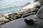 """A cat rests on Furtada Island, popularly known as """"Island of the Cats,"""" in Mangaratiba, Brazil, Tuesday, Oct. 13, 2020. Volunteers are working to ensure the stray and feral cats living off the coast of Brazil have enough food after fishermen saw the animals eating others' corpses, an unexpected consequence of the coronavirus pandemic after restrictions forced people to quarantine, sunk tourism, shut restaurants that dish up seafood and sharply cut down boat traffic around the island. (AP Photo/Silvia Izquierdo)"""