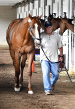 Triple Crown winner Justify, is led by a hot walker around the shed row following hi return to Churchill Downs, Monday, June 11, 2018, in Louisville, Ky. (AP Photo/Timothy D. Easley)