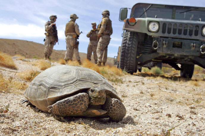 FILE - In this April 4, 2008 file photo, Marines wait for a desert tortoise, endangered and protected by federal law from harm or harassment, to move off the road at the U.S. Marine Corps' Air Ground Combat Center at Twentynine Palms, Calif. The Trump administration has given final approval to the largest solar energy project in the U.S. and one of the biggest in the world despite objections from conservationists who say it will destroy habitat critical to the survival of the threatened Mojave desert tortoise in southern Nevada. (AP Photo/Reed Saxon, File)