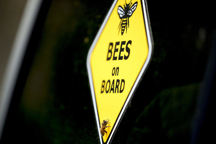 A bee rests on a yellow sign that reads