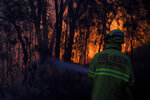 Fire and Rescue NSW firefighters conduct property protection as a bushfire burns close to homes on Railway Parade in Woodford NSW, Friday, Nov. 8, 2019. Firefighters battled 90 fires across Australia's most populous state, New South Wales, with the most intense in the northeast where flames have been fanned by strong winds, Rural Fire Service Commissioner Shane Fitzsimmons said.(Dan Himbrechts/AAP Image via AP)