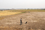 Justin Grant walks through a dry field which he's been unable to irrigate because of low water supply, Saturday, July 24, 2021, in Klamath Falls, Ore. Dozens of domestic wells have gone dry in an area near the Oregon-California border where the American West's worsening drought has taken a particularly dramatic toll. (AP Photo/Nathan Howard)