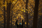A woman wearing a face mask to help curb the spread of the coronavirus takes a smartphone picture of the autumn-colored ginkgo trees on a cool day at the Olympic Park in Beijing, Friday, Oct. 30, 2020. (AP Photo/Andy Wong)