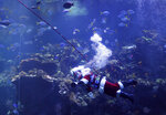 Volunteer diver George Bell, dressed as Santa Claus, swims after speaking inside the Philippine Coral Reef tank at The California Academy of Sciences in San Francisco, Thursday, Dec. 13, 2018. The California Academy of Sciences launched its holiday festivities Thursday by having a diver dressed as Santa Claus submerge into a coral reef exhibit while dozens of children watched from behind the glass. (AP Photo/Jeff Chiu)