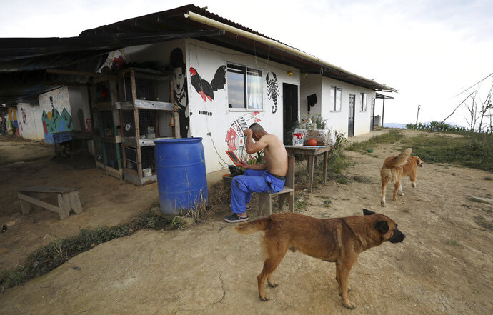 Edwin Corchawin, a 22-year-old former rebel of the Revolutionary Armed Forces of Colombia (FARC) cuts his hair in Icononzo, one of many rural camps where rebel fighters are making their transition to civilian life, in the Antonio Narino demobilization zone in Colombia, Friday, Aug. 30, 2019. Commanders with Colombia's once largest rebel army are urging their former fighters to rearm, accusing the government of falling short in implementing the 2016 peace accord that ended Latin America's longest-running conflict. (AP Photo/Fernando Vergara)
