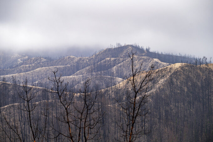 Damage from the 2020 CZU Lightning Complex Fire is seen at Big Basin Redwoods State Park in Boulder Creek, Calif., Thursday, April 22, 2021. (AP Photo/Nic Coury)