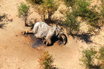 In this supplied photo a dead elephant lies in the bush in the Okavango Delta, Botswana, Monday, May 25, 2020. Botswana says it is investigating a staggeringly high number of elephant carcasses, with 275 found in the popular Okavango Delta area of the southern African nation in recent weeks.(Photo via AP)