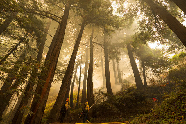 A firefighter shoots an incendiary device during a back burn  to help control the Dolan Fire at Limekiln State Park in Big Sur, Calif,. Friday, Sept. 11, 2020. (AP Photo/Nic Coury)