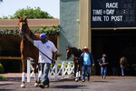 In this Friday, May 22, 2020, photo, grooms wearing face masks lead horses to track at Santa Anita Park in Arcadia, Calif. Horse racing returned to the track after being idled for one and a half months because of public health officials' concerns about the coronavirus pandemic. (AP Photo/Ashley Landis)