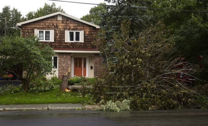 A tree is seen downed after Hurricane Larry crossed over Newfoundland's Avalon Peninsula in St. John's, Saturday, Sept. 11, 2021. (Paul Daly/The Canadian Press via AP)
