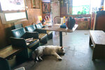 Ziggy Stardust the dog lolls by a row of old theater seats inside Saturn Bar, which is preparing to reopen later in 2021. (Ian McNulty/The Times-Picayune/The New Orleans Advocate via AP)