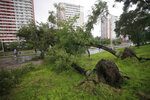 A bicyclist stops to view fallen trees from a typhoon on a main road in Pyongyang, North Korea, Thursday, Aug. 27, 2020. A typhoon damaged homes and other buildings, flooded roads and toppled utility poles on the Korean Peninsula before weakening to a tropical storm. (AP Photo/Cha Song Ho)