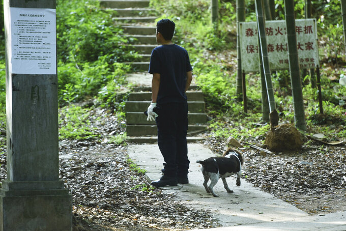 A worker with a dog looks up on a path into the hillside as a search for a runaway leopard suspected to be in the area in Hangzhou in eastern China's Zhejiang province Sunday, May 9, 2021. A search for the last of three leopards that escaped from a safari park in eastern China was ongoing, authorities said Monday, May 10, 2021 as the park came under fire for concealing the breakout for nearly a week. (Chinatopix via AP)