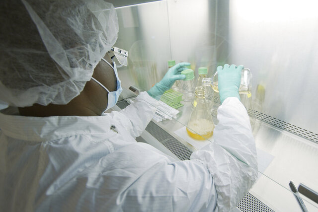 In this May 2020 photo provided by Eli Lilly, a researcher tests possible COVID-19 antibodies in a laboratory in Indianapolis. Antibodies are proteins the body makes when an infection occurs; they attach to a virus and help it be eliminated. (David Morrison/Eli Lilly via AP)
