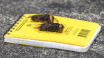 In this April 23, 2020, photo provided by the Washington State Department of Agriculture, dead Asian giant hornets sit on a researcher's field notebook in Blaine, Wash. The world's largest hornet, a 2-inch long killer with an appetite for honey bees, has been found in Washington state and entomologists are making plans to wipe it out. Dubbed the