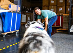 Cuddle Clones co-founder Adam Greene plays with a happy Australian Shepherd named Freya in the shipping area of their office on Baxter Ave. in Louisville, Ky. Co-founders Adam Green and Jennifer Williams have seen Cuddle Clones rocket to success since their start in 2013. (Jeff Faughender/Courier Journal via AP)