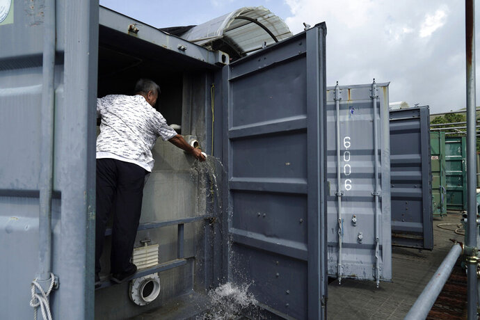 Arthur Lee, owner of MoVertical Farm, works on his fish tank inside a shipping container in Yuen Long, Hong Kong's New Territories Tuesday, Sept. 22, 2020. After a career making the shipping containers that transport untold tons of freight around the world, Lee has stuck with the metal boxes in retirement, now by repurposing them as farming environments for raising crops and fish. (AP Photo/Kin Cheung)