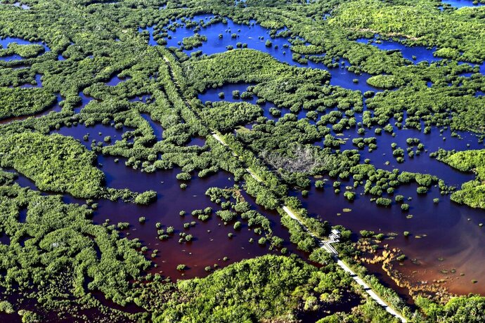 In this Thursday, Oct. 24, 2019, photo, the Marsh Trail bisects a section of the Ten Thousand Islands National Wildlife Refuge in the western Everglades near Naples, Fla. Clusters of mangroves form islands in a shallow estuary. A healthy mangrove forest is important for protecting coasts during storms. (AP Photo/Robert F. Bukaty)