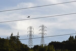 A helicopter hovers above large electrical towers while inspecting the lines in Orinda, Calif., on Thursday, Oct. 10, 2019. Business continue to be closed due to the recent Pacific Gas & Electric shutdown. The utility company began restoring power to Bay Area residents Thursday, taking the first steps in what could be a days-long process to end an outage that left many homes and businesses in the dark. (Jose Carlos Fajardo/East Bay Times via AP)