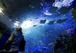 Stingrays glide through one of the many saltwater tanks at the newly opened Aquarium at the Boardwalk in Branson, Mo., on Wednesday, Dec. 2, 2020. (Nathan Papes/The Springfield News-Leader via AP)