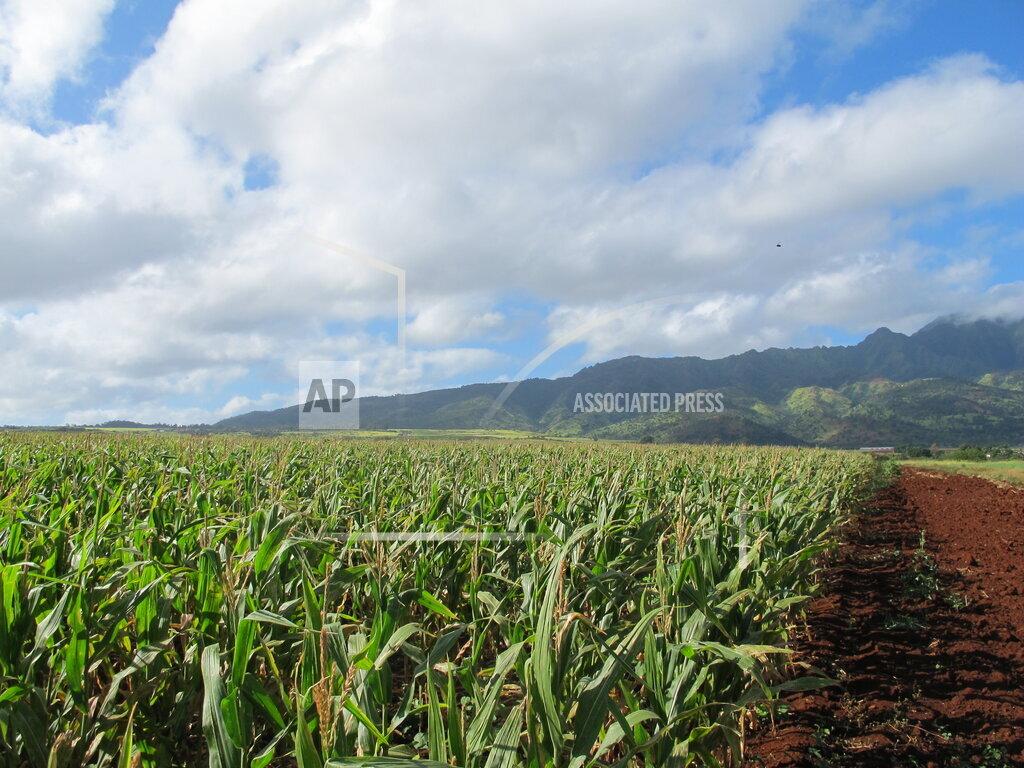 Food and Farm Seed Farming