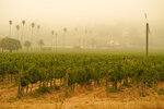 FILE - In this Sept. 10, 2020, file photo, smoke and haze from wildfires hovers over a vineyard in Sonoma, Calif. Smoke from the West Coast wildfires has tainted grapes in some of the nation's most celebrated wine regions. The resulting ashy flavor could spell disaster for the 2020 vintage. (AP Photo/Eric Risberg, File)