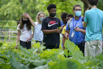 Students Lyla Mendoza, left, Nesha Moskowitz, second from left, Giovanni Pierre, center, and camp educator Adrian Oller, center right, examine wild sorrel during a hike at Mass Audubon's Boston Nature Center and Wildlife Sanctuary, in the Mattapan neighborhood of Boston, Wednesday, June 23, 2021. Audubon Society chapters are grappling with how to address their namesake's legacy as the nation continues to reckon with its racist past. John James Audubon was a celebrated 19th century naturalist but also a slaveholder publicly opposed to abolition. (AP Photo/Steven Senne)
