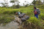 Asunta Salazar and her husband Mariano Torres, who are members of Israelites of the New Universal Pact religious group, guide a mule through a lakelet as they head home after harvesting bananas from their farmland, near San Pablo, Peru, Monday, March 29, 2021. For more than 30 years, Israelite communities have popped up in remote Amazon forests as the faithful have migrated there from the Andes Mountains or from desert neighborhoods on Peru's Pacific coast. (AP Photo/Rodrigo Abd)