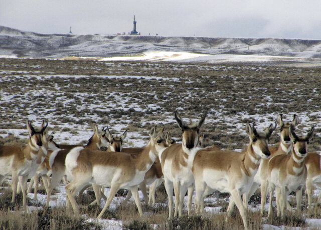 FILE - In this Jan. 21, 2010, file photo, pronghorn antelope pass by a natural gas drilling rig, background, south of Pinedale in western Wyoming. Environmental groups are suing over plans for a potentially huge Wyoming gas field they say would endanger antelope in Grand Teton National Park by hindering a migration route between the park and a basin. The Upper Green River Alliance, Western Watersheds Project and Center for Biological Diversity sued the U.S. Bureau of Land Management in U.S. District Court in Cheyenne on Wednesday, Feb. 19, 2020. (AP Photo/Mead Gruver, File)