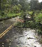 This photo provided by the Hawaii Department of Transportation shows tree limbs that have blocked the Hana Highway near Hana on the island of Maui Wednesday, Sept. 12, 2018. Maui was hit with heavy rain and powerful winds Wednesday as a gradually weakening tropical storm neared Hawaii, with forecasters predicting Tropical Storm Olivia could dump 5 to 10 inches (12 to 25 centimeters) of rain. Some places could get as much as 15 inches (38 centimeters). (Hawaii Department of Transportation via AP)