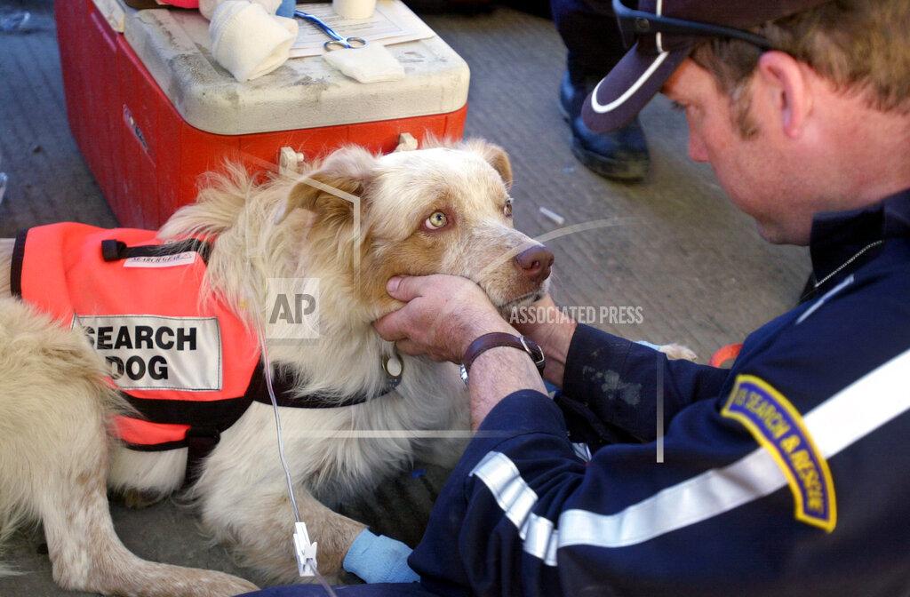 AP A NY USA ATTACKS RESCUE DOGS