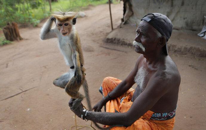 A Sri Lankan Telugu man holds his monkey performing tricks in a colony in Nachchikulama, Sri Lanka, Monday, June 8, 2020. Sri Lanka's Telugu community, whose nomadic lifestyle has increasingly clashed with the modern world, is facing another threat that could hasten its decline: the COVID-19 pandemic. (AP Photo/Eranga Jayawardena)