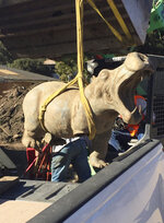 In this Feb. 17, 2018, photo provided by Amanda Hockham, a 400-pound bronze hippo is recovered from the mud in Montecito, Calif. The hippo, which had been swept away in the mudslides, belonged to a woman who had bought it for her now-deceased husband, and it has been returned. (Amanda Hockham via AP)
